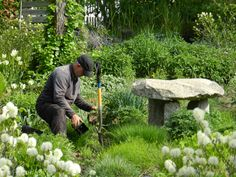 Roy Diblik, creator of the Know Maintenance Approach to Gardening, working in the display gardens at Northwind Perennial Farm in Burlington, WI.
