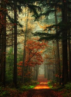 Fairy tale Forest, Netherlands