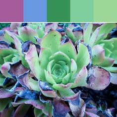 《Faded Succulent Palette》