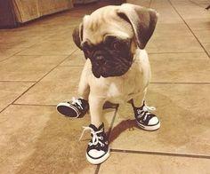Lalige Cute Pug Dogs Baby Women Stylish Canvas Slip-on Skateboarding Shoes
