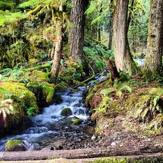 """A picture is worth a thousand words""  #oregonexplored #drippin_awesome #oregon #outdoors #waterfall #falls #hiking #hike #nature #portland #pnw #northwest #winter #forest #picoftheday #bestofthenorthwest #discoveroregon #instalike #beautiful #eaglecreek #water #rain #instahike #traveloregon #upperleftusa #outdoors #or_exp_002 #outdoors #natureaddict #nw #northwest #nature #traveloregon #iliveloveoregon #exploreoregon #oregon #Padgram"