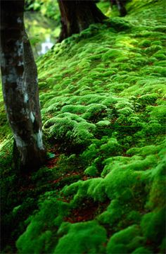 . -The moss on land felt different, soft. Astrid touched it curiously, memorizing the texture, the feathery dampness feeling good against her skin.