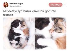 #anlamlı #düşündürücü #eğlenceli #güzel #komik #konuşan All About Animals, Animals And Pets, Wildlife Photography, Animal Photography, Best Caps, Cute Little Animals, Funny Tweets, Some Pictures, Guinea Pigs