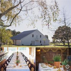 Beautiful Lacewood Wairarapa Wedding Venue With Blue Carrot Catering Blue Carrot, Perspective Photos, Wedding Venues, Wedding Photos, Table Settings, Cabin, House Styles, Outdoor Decor, Flowers