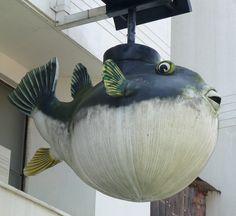blowfish in Kochi, Japan, April 2012.