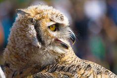 Photo Owl by Gyula Penzer on 500px