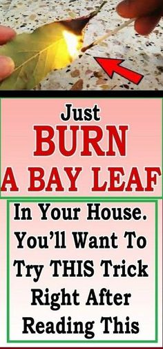 7 Things That Happen if You Burn a Bay Leaf – Something Logical Health And Beauty Tips, Health And Wellness, Burning Bay Leaves, Ways To Relieve Stress, Reduce Stress, Medical Research, Healthy Tips, Healthy Food, Healthy Eating