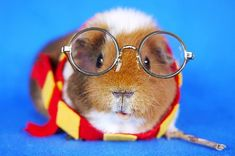 These Guinea Pigs Dressed Up As Your Fave Characters Are Way Too Adorable