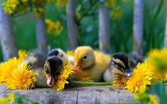 baby birds - Google Search