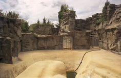 elephant pool habitats - Buscar con Google