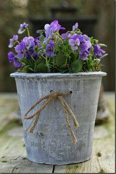 Creative Spring Garden Pots and Planters Grey Gardens, Outdoor Gardens, Container Plants, Container Gardening, Gardening Zones, Pot Jardin, Deco Floral, Spring Garden, Pansies