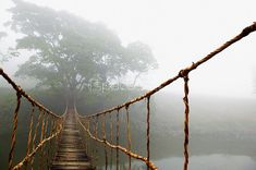 Into the fog or out of it? rope bridge - Vietnam