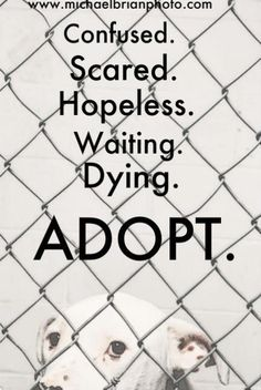 CONFUSED.    SCARED.    HOPELESS.    WAITING.    DYING.    ADOPT.  RESCUE.  SHELTER.  FOSTER.  TRANSPORT.  DONATE.    Please let's save their lives by adopting - and if you can't adopt - DO something.