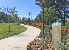 Oso Viejo Park in Mission Viejo. Near Oso Creek Trail, north end of park. Large park with fields, exercise equipment, playgrounds and more.