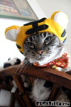 Tiger Costume for Dog or Cat  #Elanor Wedman