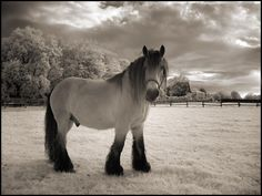 Wallpapers4u: Perfect horse photography black nature white beauty ...