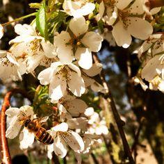 Buzzy buzzy bumble bee