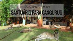 Trabalhando em um santuário para Cangurus