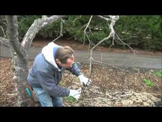 This Is How To Prune - Back to Eden Garden - L2Survive with Thatnub - YouTube