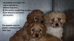Petition update · More underage puppies seized in smuggling attempt · Change.org