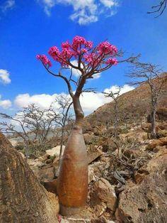 Socotra in Yemen
