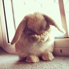 Don't be shy! Make an offer! Thank you for visiting my closet! If you see something you like, don't be shy! Make an offer! Stupid Pictures, Funny Pictures, Animals And Pets, Cute Animals, Hug Quotes, Cute Love Cartoons, Cute Creatures, Best Beer, Life Motivation