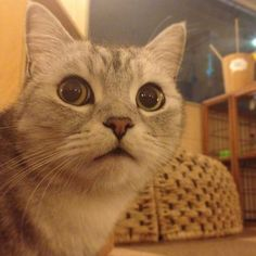 また猫カフェいってしまった… - @makoccchan   Webstagram