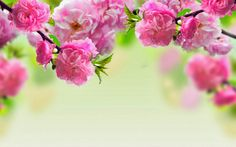 Find the best Beautiful Flowers Wallpaper on GetWallpapers. We have background pictures for you! High Wallpaper, Wallpaper Pictures, Nature Wallpaper, Wallpaper Backgrounds, Spring Backgrounds, Computer Backgrounds, Backgrounds Free, Computer Wallpaper, Field Wallpaper