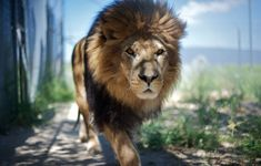 Mac OS X Lion Wallpaper. Based on the lion theme, the wallpapers consist of the jungle king in different poses and moods. Lion Hd Wallpaper, Tier Wallpaper, Wallpaper Pictures, Animal Wallpaper, Cool Wallpaper, Nature Wallpaper, 4k Wallpapers For Pc, Hd Desktop, Lion Pictures