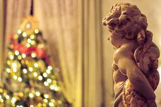 Holiday Tree, Christmas Holidays, Instagram Website, Windsor, Dreadlocks, Trees, Facebook, Twitter, Hair Styles