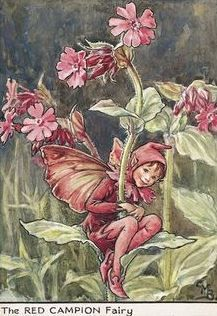 Cicely Mary Barker | The Red Campion Fairy