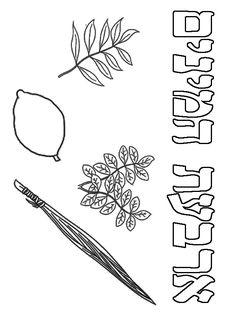 דפי צביעה להורדה - חגים - סוכות - ארבעת המינים - אמוס ישראל - עבודות יצירה יצירות לקיץ חימר קל מלאכת יד