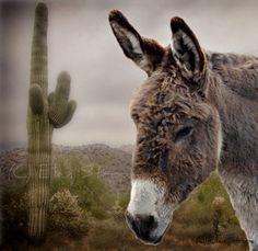 PHOTO CARD Burro Donkey