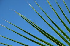 Dragonfly morning. #palm #tree #mexico #blue #ocean #sea #green #leaves
