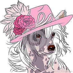 vector-funny-cartoon-hipster-dog-chinese-crested-breed-pink-hat-roses-39899129.jpg