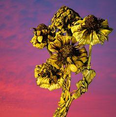 Winters Flower 2