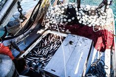 Filling the hatches.  Prince William Sound 2014.  Photo credit- Thomas Lopez. www.seafoodapparel.com