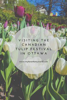 What you need to know to visit the Ottawa Tulip Festival in Ottawa, Canada plus a ton of beautiful Vancouver, Toronto, Travel Usa, Travel Tips, Travel Guides, Travel Articles, Quebec, Ottawa Tulip Festival, Ontario Travel
