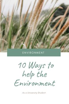 Here is a list of ways that you can help the environment as a university student. These tips are easy and may seem small but a little goes a long way! Help The Environment, University College, Save The Planet, Student, Future, Easy, Plants, Blog, Future Tense
