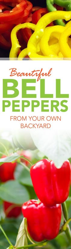 Beautiful Bell Peppers from Your Own Backyard | Yard Central