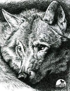 Google Image Result for http://fc09.deviantart.net/fs24/i/2009/253/6/b/Wolf___Pen_and_Ink_by_katanimate.jpg