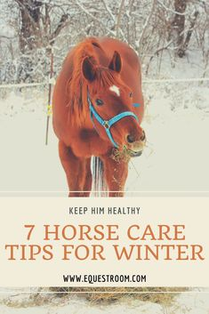 How To Keep Your Horse Healthy in Winter   Crispy winds have started to blow, which means winter is almost here! If you own or loan a horse, you must already know that winter is the most challenging season to take care of a horse and continue training. Especially if you are planning to compete in this season, you shoul