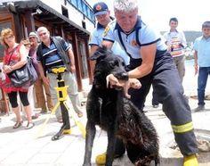 Un perro callejero se volvió todo un héroe después de un rescate masivo de cachorros