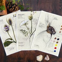 These are some of the sketches from my field journal, back when leaving your home was allowed. They are two wildflowers (Queen Anne's Lace and Wild Teasel) and a hare; I used graphite pencil and oil paints on parchment paper and added notations and color palette so as to have a precise reference for future oil paintings.