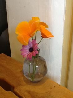 Purple and orange flowers from the garden!
