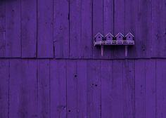 404 Best The Color Purple Images Lilac Color Purple Colors All