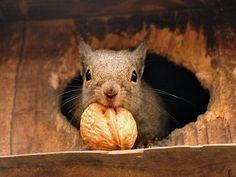 My Nut!