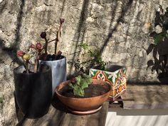 Cerimiche e piante grasse