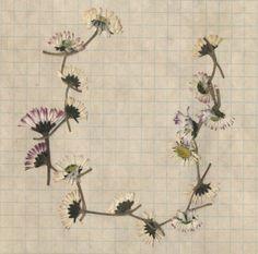 pressed daisy chain//LYNNETTE MILLER