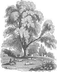 ağaç çizimi karakalem ile ilgili görsel sonucu
